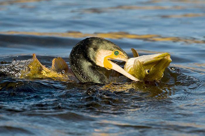 Dierenactivisme en Sportvissen – Vijf voor twaalf