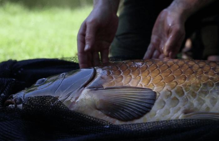 [VIDEO] How To – Veilig een vis landen en wegen
